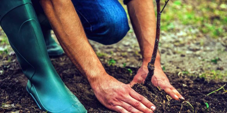 Sezon sadzenia roślin?