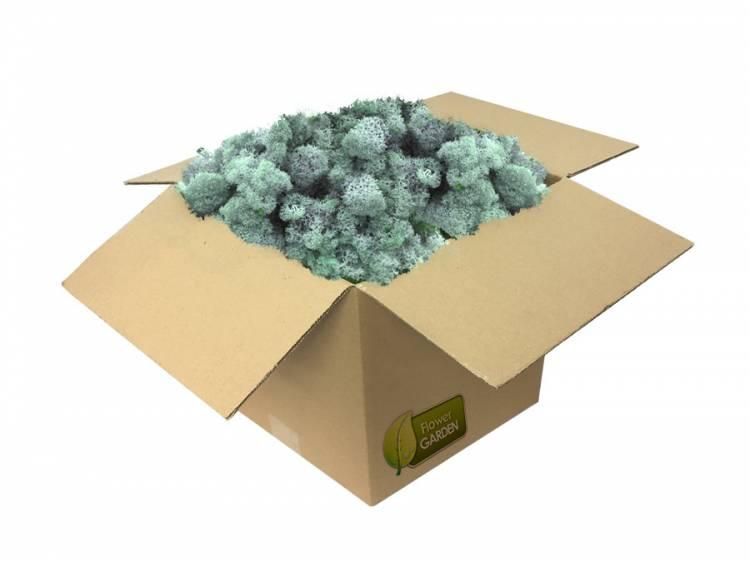 Mech Chrobotek Reniferowy Ice Blue 0,5kg