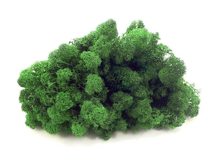 Mech Chrobotek Reniferowy Ciemnozielony Moss Green 100g