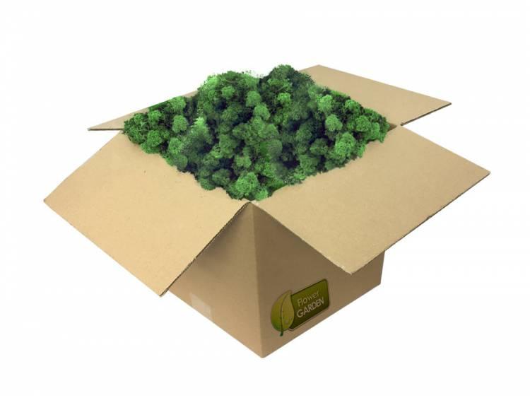 Mech Chrobotek Reniferowy Moss Green 0,5kg