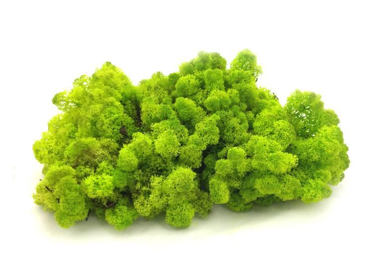 Mech Chrobotek Reniferowy Spring Green 0,5kg