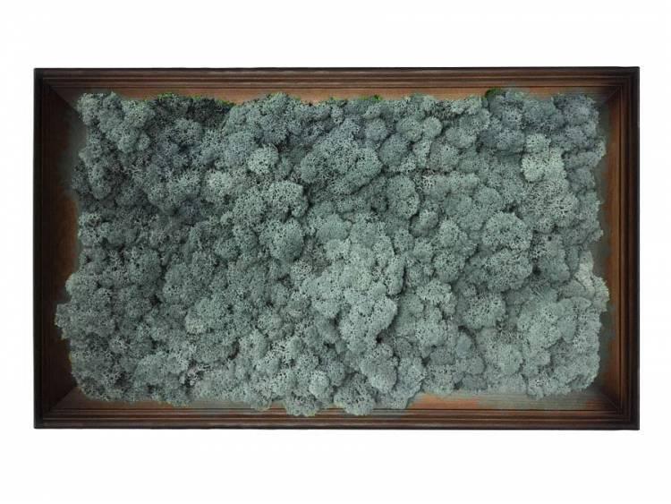 Obraz z mchu chrobotka Ice Blue w ramie z drewna 61x41cm