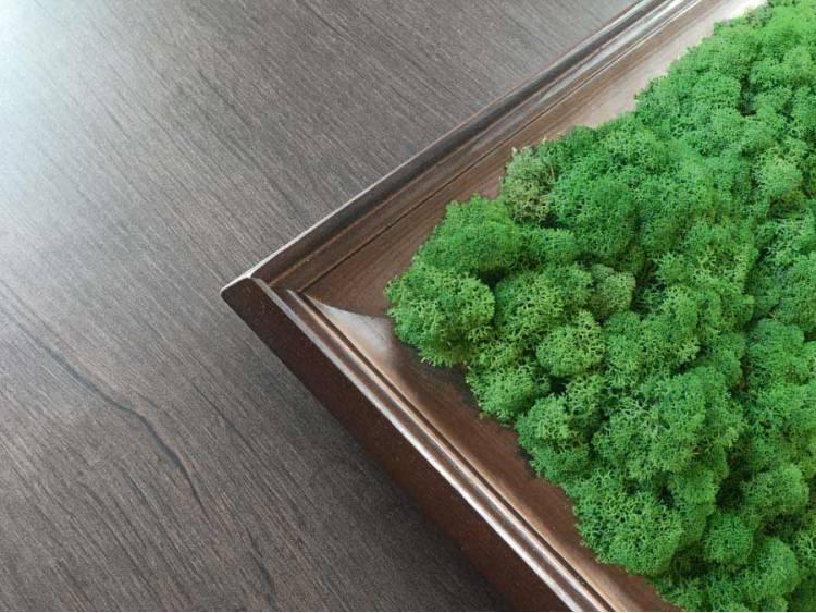 Obraz z mchu chrobotka Moss Green w ramie z drewna 61x61cm