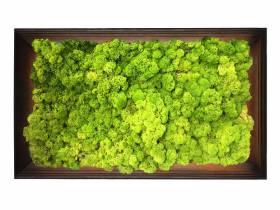 Obraz z mchu chrobotka Spring Green w ramie z drewna 61x41cm
