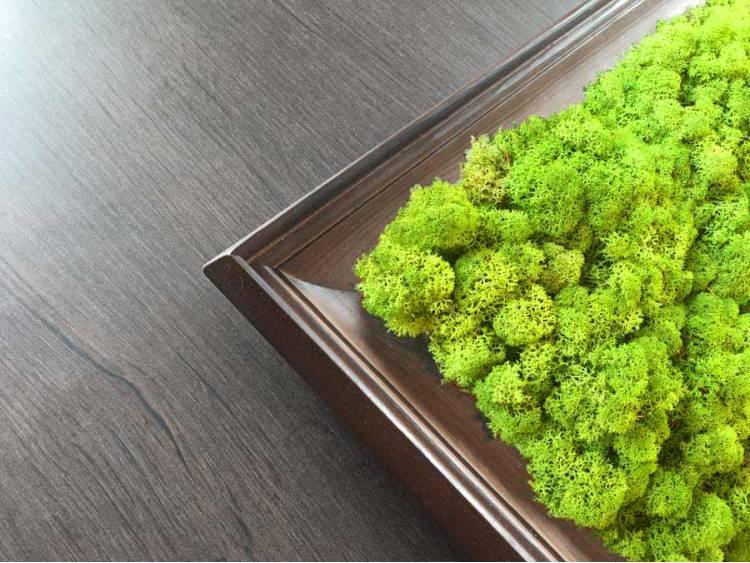 Obraz z mchu chrobotka Spring Green w ramie z drewna 61x61cm