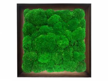 Obraz z mchu poduszkowego w ramie z drewna 61x61cm