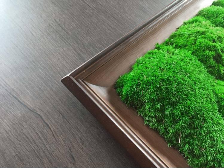 Obraz z mchu poduszkowego w ramie z drewna 61x41cm