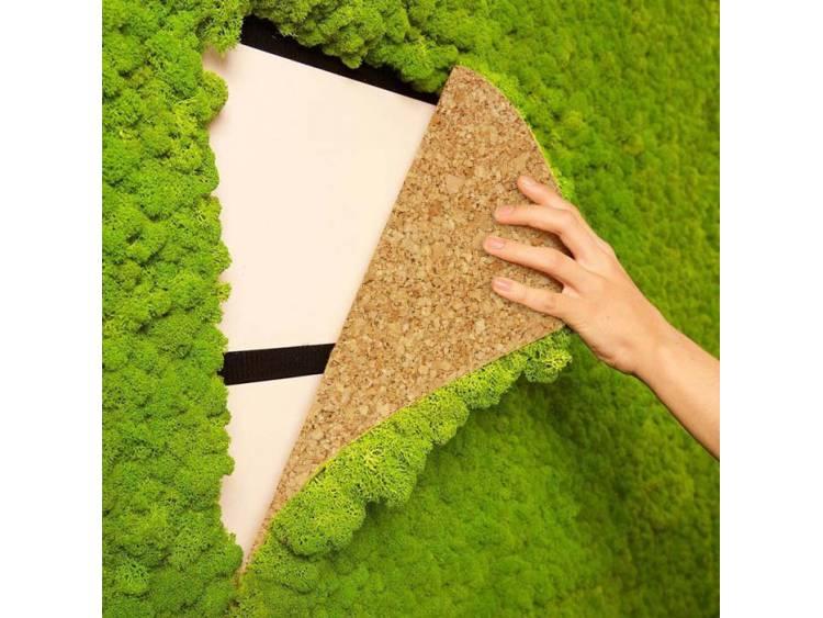 Panel z mchu chrobotka na ścianę Zielony 45x45cm