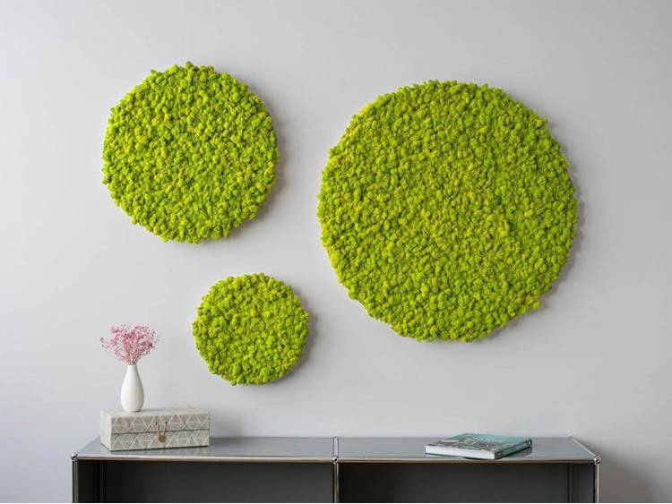 Panel z mchu chrobotka okrągły Spring Green