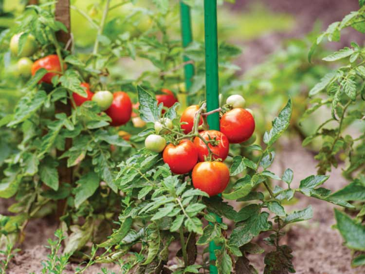 Tyczka ogrodowa stalowa zielona 1,1x100cm