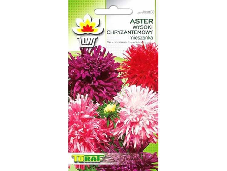Nasiona Aster Chryzantemowy wysoki mieszanka 1g