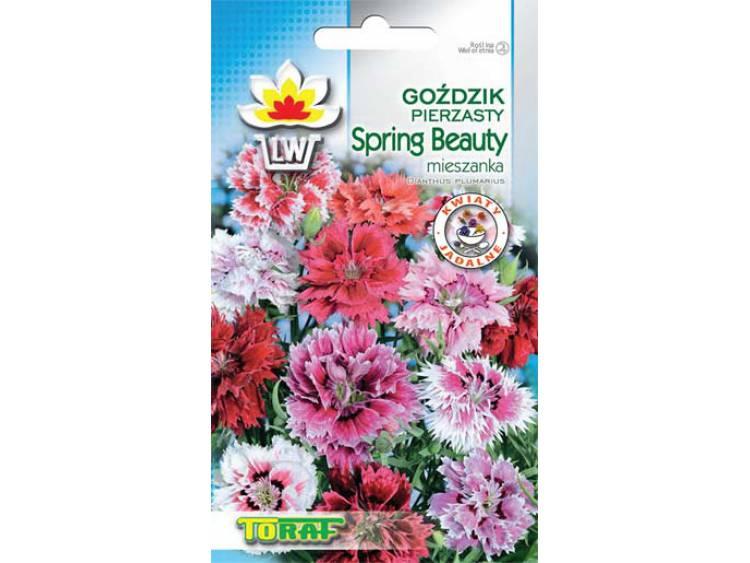 Nasiona Goździk Pierzasty Spring Beauty mieszanka 0,5g