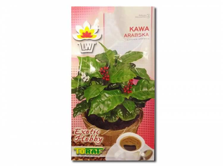 Nasiona Kawa Arabska 6 szt.