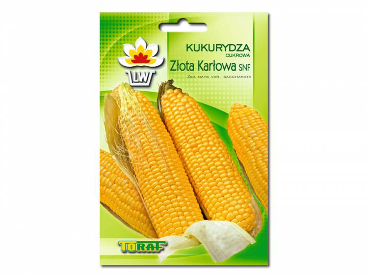 Nasiona Kukurydza Złota Karłowa 20g