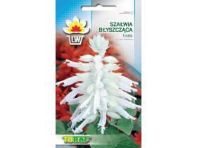 Nasiona Szałwia błyszcząca biała 10 szt.