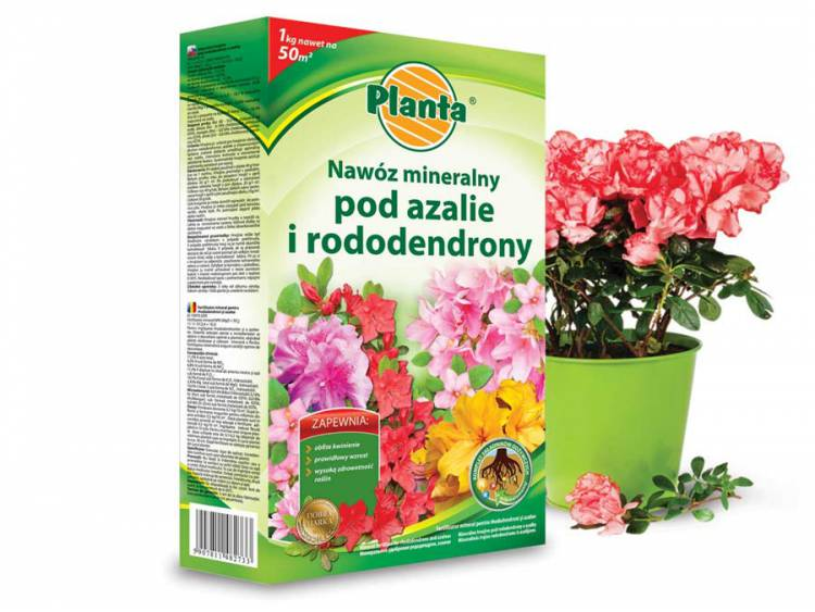 Nawóz do azalii i rododendronów PLANTA 1kg