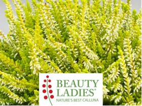 Wrzos Anouk ® Beauty Ladies