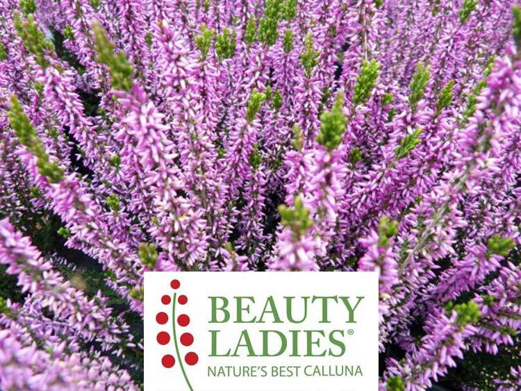 Wrzos Renate ® Beauty Ladies